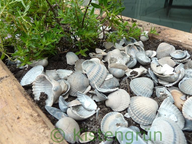 Mediterrane Kräuter mit Muschel Mulch